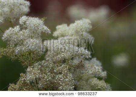 Group of elk herbs