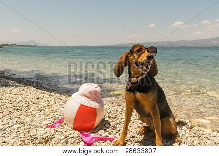 Dog on beach wearing sunglasses with toys and the sea as background.