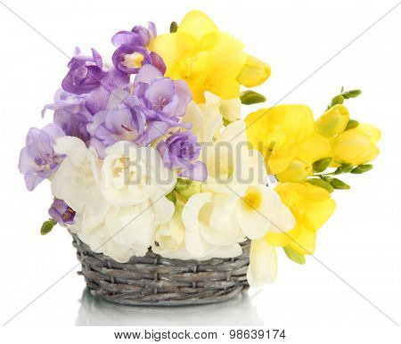 Beautiful bouquet of freesias in basket, isolated on white
