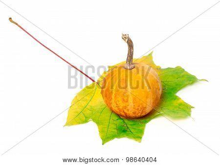 Small Orange Decorative Pumpkin On Yellowed Maple Leaf