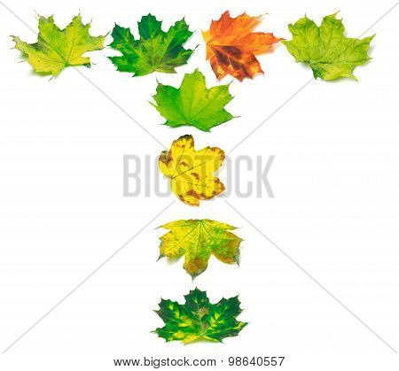 Letter T Composed Of Multicolor Maple Leafs