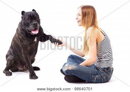 Cane Corso Dog Executes A Command Give Paw