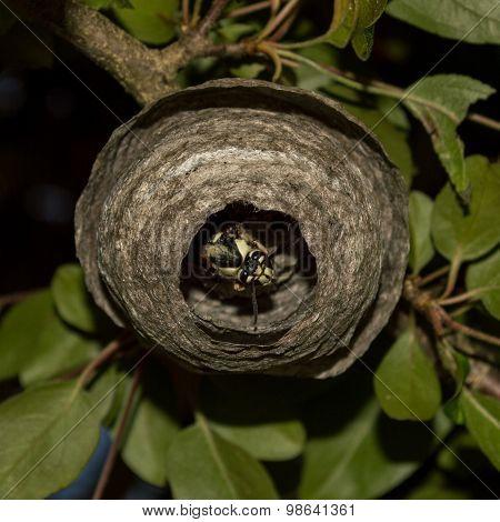 A wasp at home