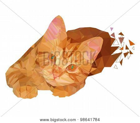 Polygon Illustration Of Colorful Red Cat