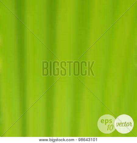 Blurred Background Green Leaf Texture