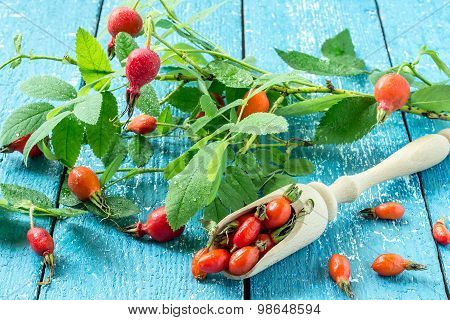 Rosehip - A Natural Source Of Vitamin C