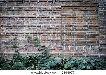 Brick wall with plants