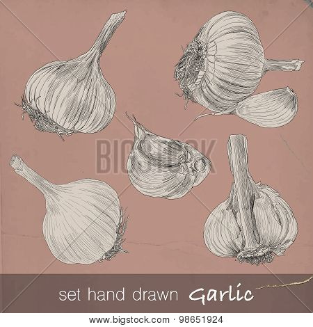 Hand drawn set of garlic. Six isolated vector illustration with