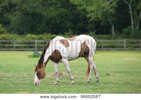 Full length horse outside