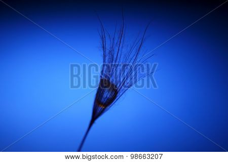The Seed Of A Dandelion With Water Drop Inside On A Dark Blue Background