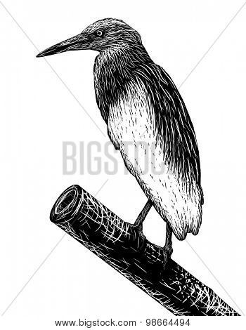 EPS8 editable vector sketch of a pondheron in scratchboard style