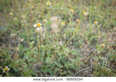 Vintage Photo Of Flower Grass Field In Sunset