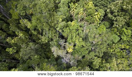 Canopy of Daintree Rainforest