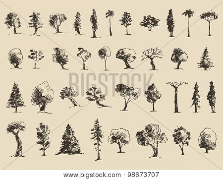 Trees sketch set, vintage vector style, hand drawn
