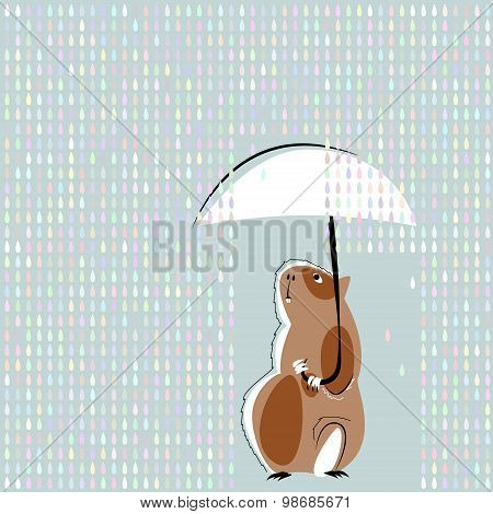 Guinea Pig With Ubmbrella In The Rain.