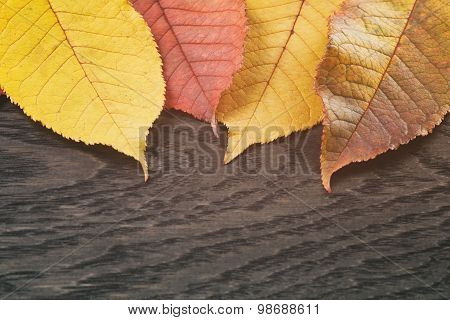 autumn cherry leaves on wood background