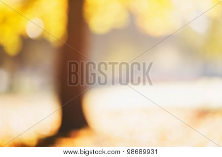 natural bokeh with autumn trees