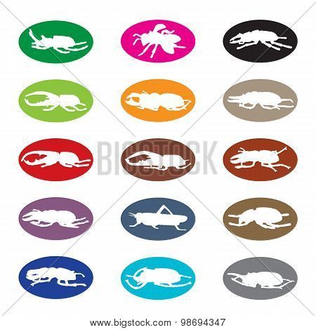 Vector Group Of Insects On White Background.