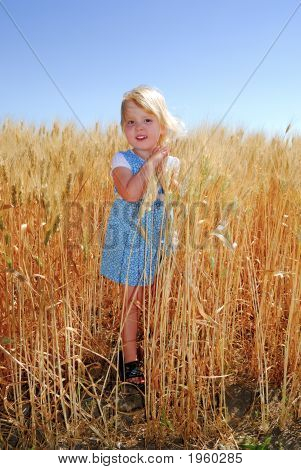 Little Girl In Durum Wheat Field