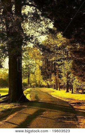 arbolada camino de campo durante la hora dorada
