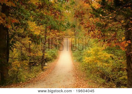 Tree line pathway during autumn foliage