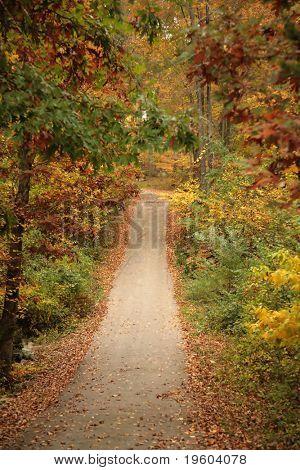 Tree line pathway during autumn foliage