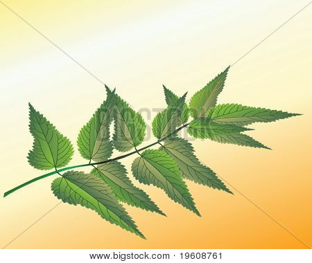 Branch of nettle. Vector.