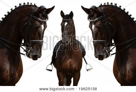 horses isolated on white