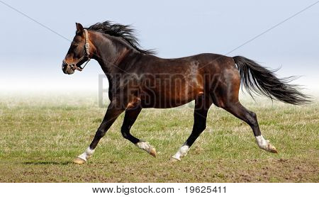 cavalo manchado