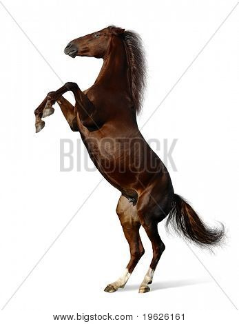 brown mare - the Budenny horse