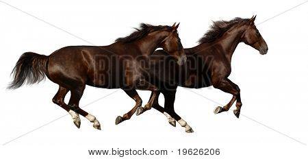 galope de caballos