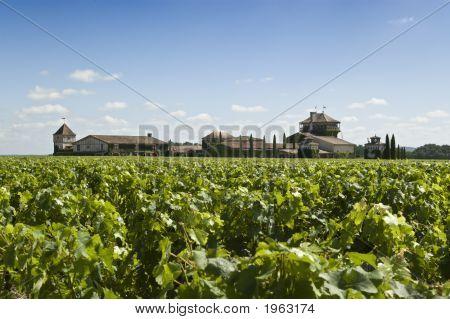 Winery In Bordeaux