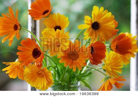 Closeup of orange flowers on window-sill. Calendula Officinalis L.