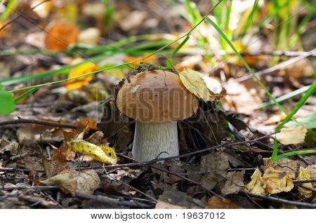Go mushrooming (play hide-and-seek)