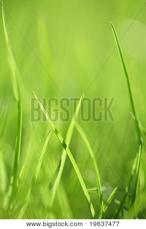 Abstract green grass background. Shallow focus depth on front blades of grass
