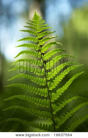 Green leaf of fern - shallow focus depth on center of leaf