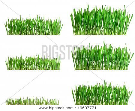 Green grass growing different phases - isolated on white background