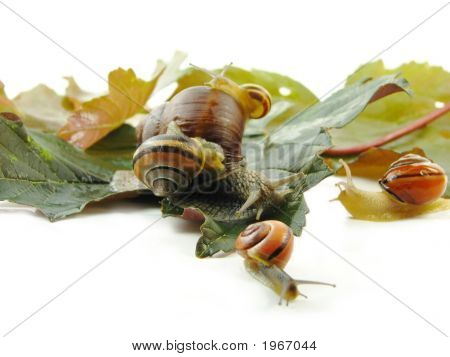 Five Slugs And Leafs On White