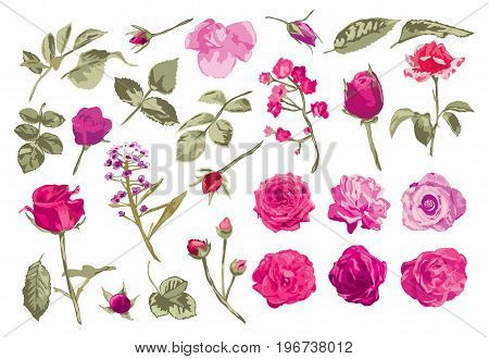 Elegant decorative vector rose flowers and leaves in watercolor style design element. Floral decoration for wedding invitations greeting cards banners. All elements are editable