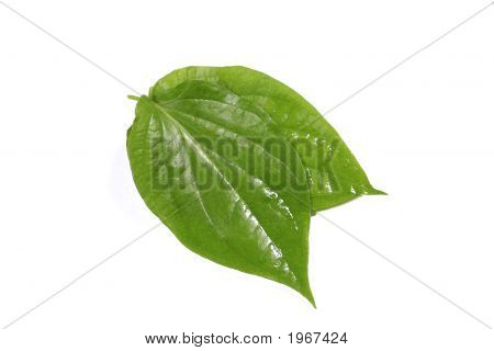 Couple Betel Leaves