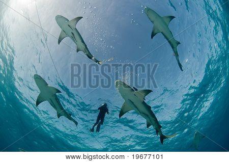 Sharks aflight