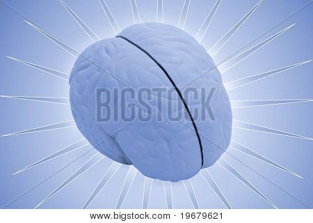 Model Brain