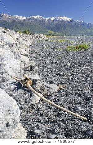 Kaikoura Beach Driftwood