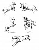 stock photo of galloping horse  - Sketches a pencil  - JPG