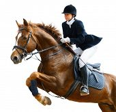 foto of horse girl  - Young girl jumping with sorrel horse  - JPG