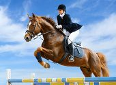 stock photo of saddle-horse  - Young girl jumping with sorrel horse - JPG