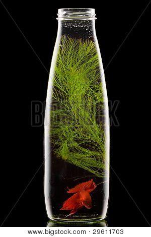 garrafa com peixe vermelho em fundo preto