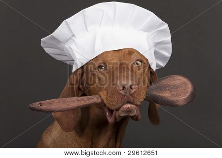 Pure Breed Dog Chef