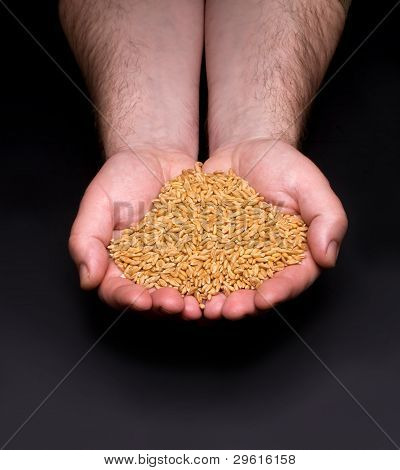 Hands With Grains