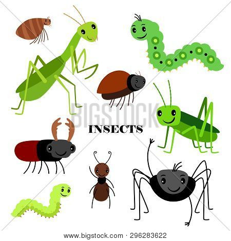 poster of Illustration Of Vector Crawling Insects Isolated On White Background. Insect Bug, Fauna Wildlife, Ca